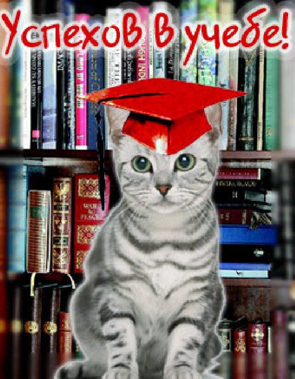 Поздравление с успехами в учебе